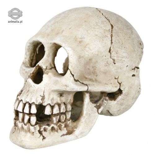 Zdjęcie Trixie Dekoracja ludzka czaszka   15 cm