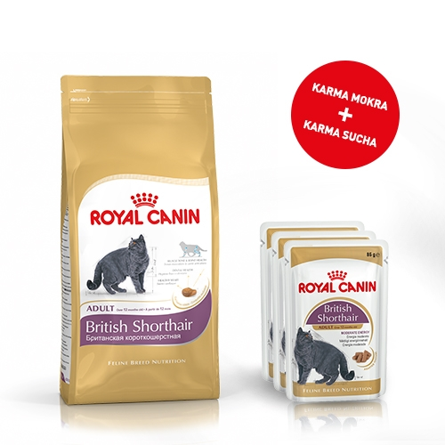 royal canin zestaw british shorthair karma saszetki 2kg 12x85g. Black Bedroom Furniture Sets. Home Design Ideas
