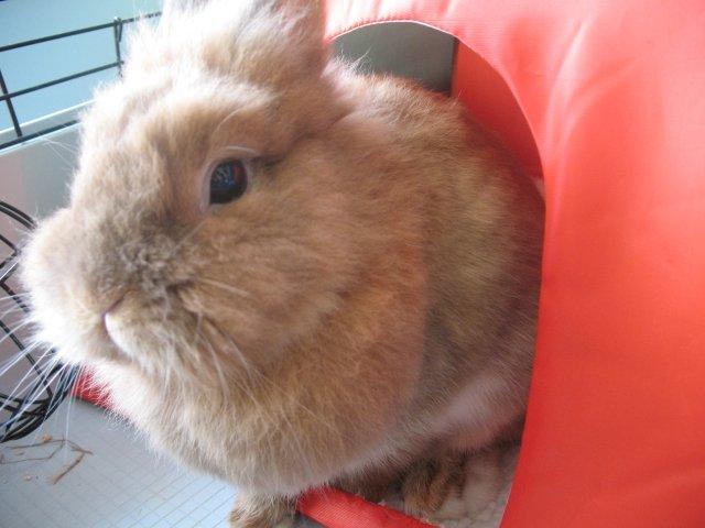 animalia.pl Trixie Namiot dla królika 37 x 37x 35 cm